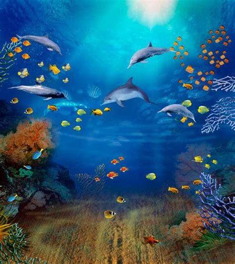 xft  sea dolphins coral reef sunshine fish aquarium
