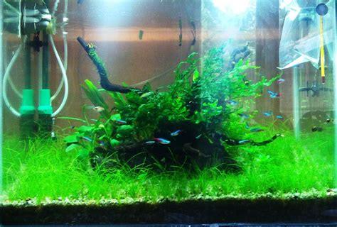 membuat tanaman aquascape subur cara membuat diffuser co2 atagaleri net