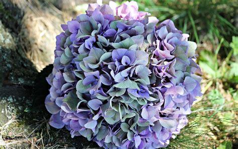 purple multi petal flower  grass  stock photo