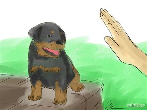 how to your rottweiler puppy with simple commands best 25 rottweiler puppies ideas on puppy breeds rottweiler and
