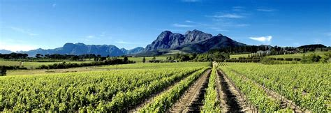 Vintners Wine Cellar - sold out discover south africa gems from the cape wine routes bishop s cellar