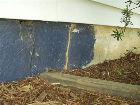 mud tubes   wall colonial pest control