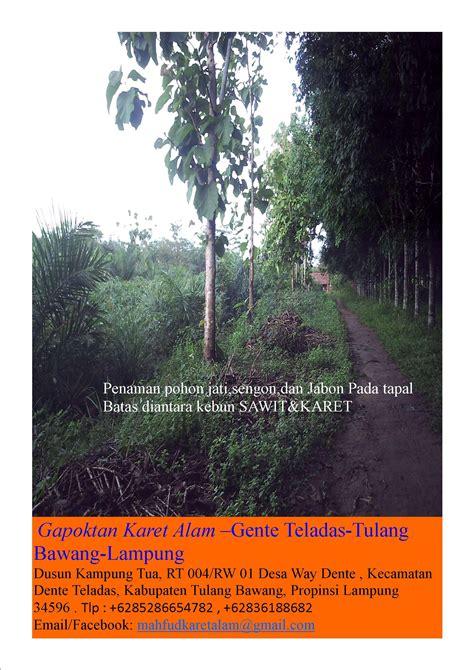Pupuk Kotoran Sapi Untuk Karet aneka agrebis gapoktan petani karet alam
