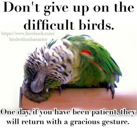 Crazy Bird Meme - 30 best birb meme images on pinterest funny photos