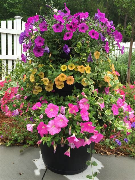 best flowers for small pots planters awesome flowers for planters flowers for