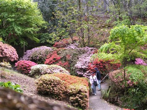 Mt Lofty Botanical Gardens Panoramio Photo Of Azalea Bushes Mt Lofty Botanic Gardens