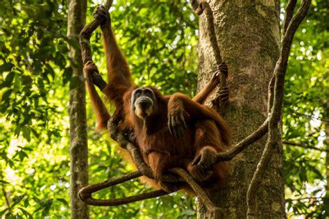 imagenes de animales jungla animales que viven en la jungla imagui