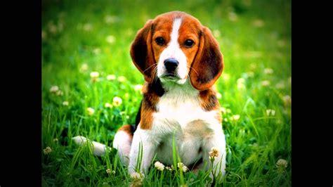 imagenes epicas de animales animales dom 233 sticos los perros youtube