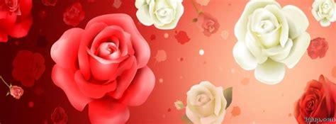 imagenes de rosas blancas para portada de facebook imagenes de rosas rojas para descargar imagui