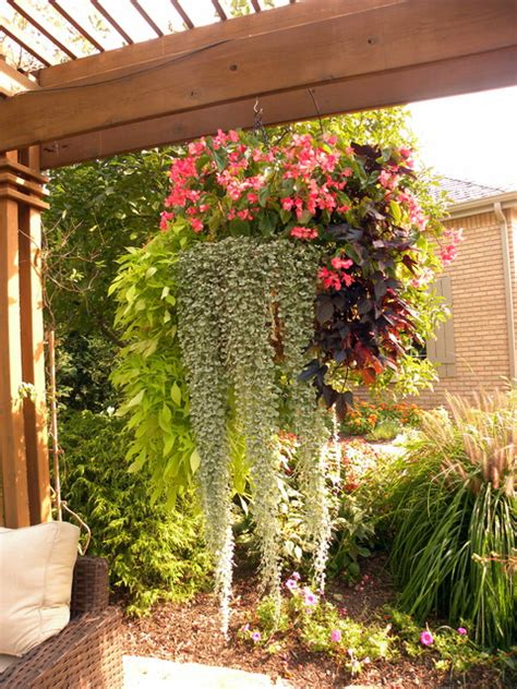 Hanging Plants For Patio by Summer Containers Traditional Patio Chicago
