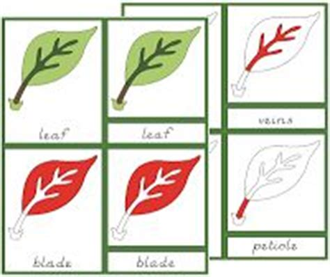 montessori three part cards template 1000 images about learning montessori botany on