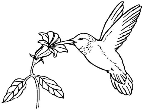 printable coloring pages hummingbirds printable easter coloring page hummingbird