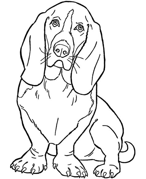 coloring pages hound dog basset hound dog coloring page kindergarten literature