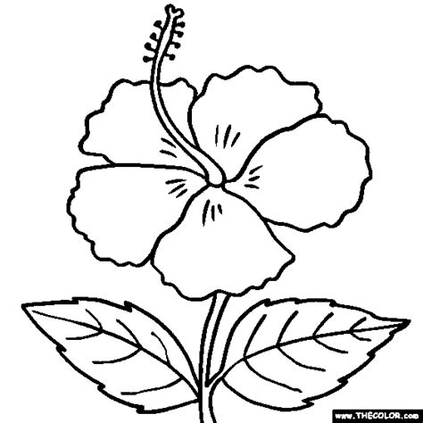 Hibiscus Flower Coloring Page hibiscus flower coloring pages flower coloring page