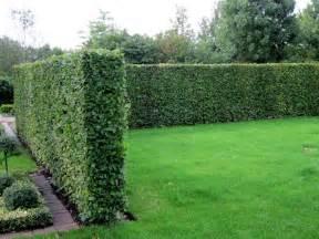 merveilleux se cacher des voisins dans jardin 5 5
