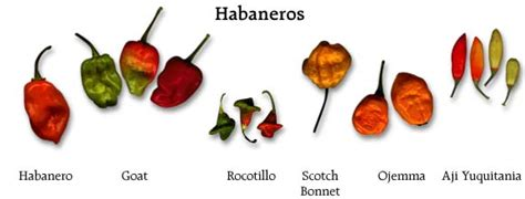 filme stream seiten heat types of chili peppers chart