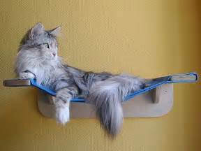 remodelaholic 12 diy projects for cats and their owners