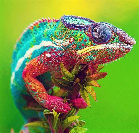 adorable amazing animal image 530598 on favim com