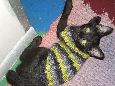 knitting pattern sweater for cat kitten sweater knitting