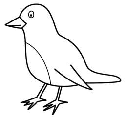 pictures of birds to color coloring pages of birds eagle parrot etc gianfreda net