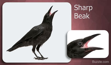 Bird Beak by Different Types Of Bird Beaks You Ll Be Amazed By The Variety