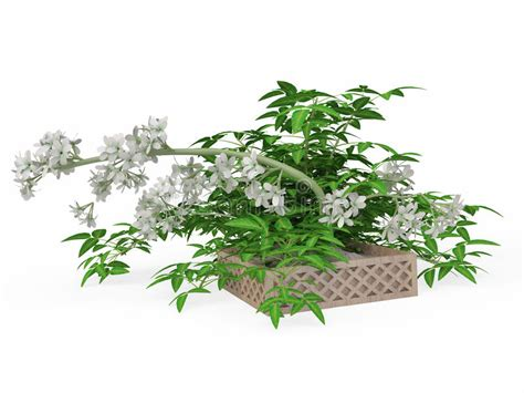 piante grasse da interno con fiori piante da interno con fiori finest fiori da vaso da