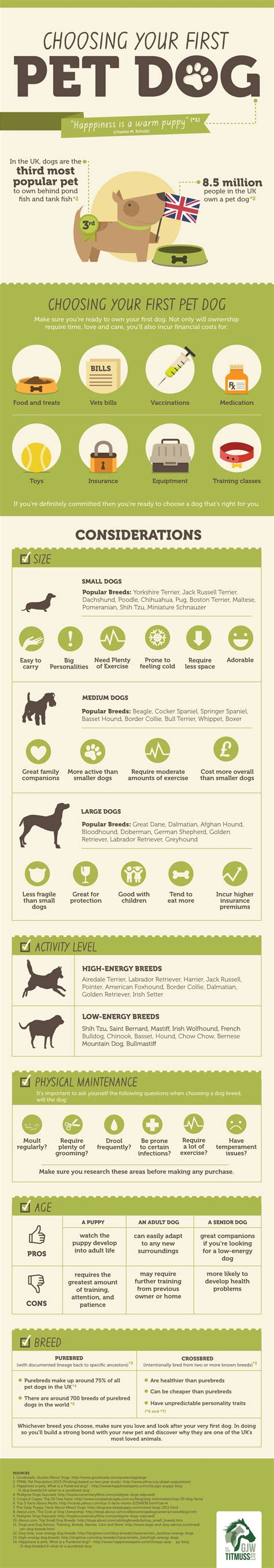 how to choose a puppy how to choose pet infographics graphs net