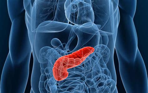 tumore alla testa pancreas come funziona il pancreas di romeo