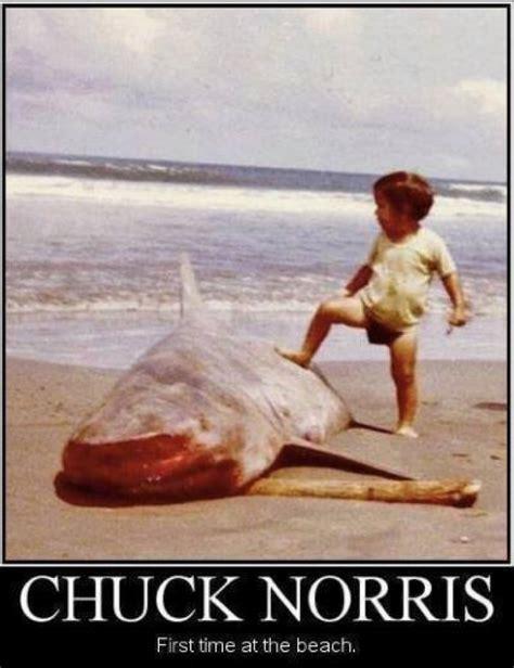 Funny Beach Memes - chuck norris meme http www jokideo com chuck norris