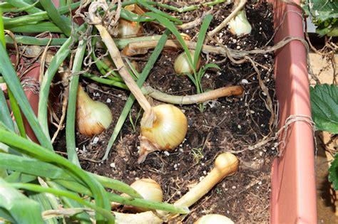Nursing Cover Cottonseeds successful container gardening preparedness doom and bloom tm doom and bloom tm