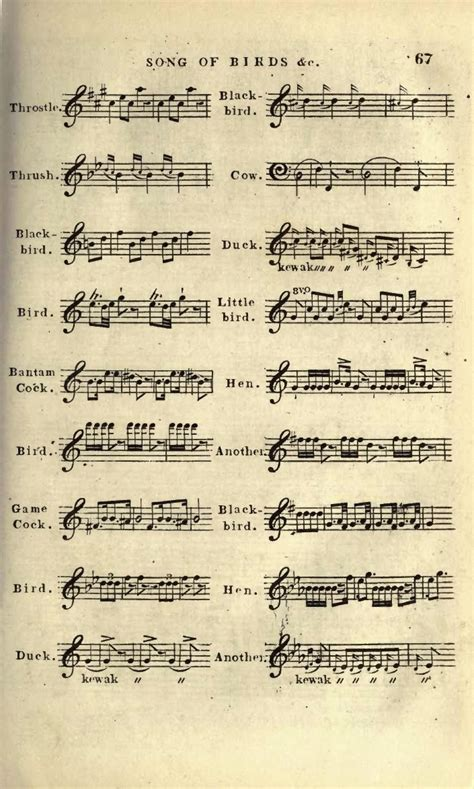 bird song sheet music 67 creation s glorious song