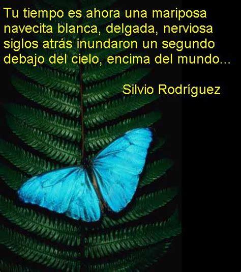frases con mariposas imagenes fotos bonitas de mariposas rom 225 nticas imagenes de mariposas