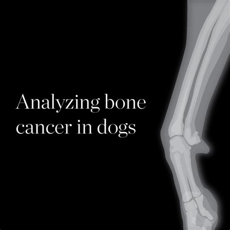 bone cancer in dogs the daily illini analyzing bone cancer in dogs the daily illini