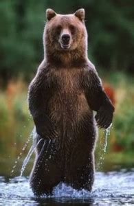 bear myth  yellowstone bear world yellowstone bear world