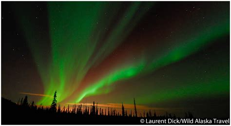 northern lights aurora borealis fairbanks alaska northern lights aurora borealis over fairbanks alaska