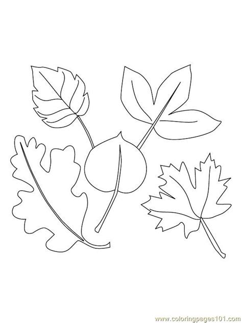coloring page fig tree fig trees coloring pages