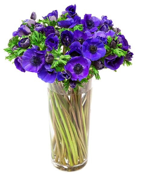flowers delivered blue anemone flower bouquet www imgkid the image