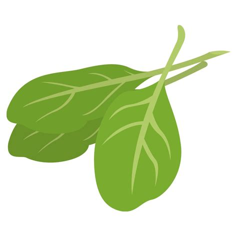 artwork clipart spinach clipart clipart suggest