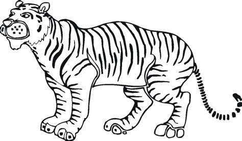 stripeless tiger coloring page tiger outline drawing clipart best