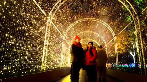 special things to do at christmas for work at kew visitlondon