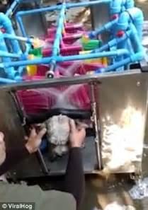 thailand unveils  worlds  automatic dog washing