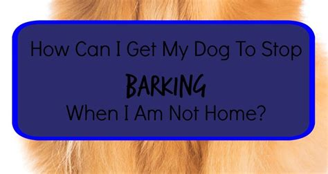 how do i my to stop barking do i make my stop barking 28 images stop barking teach your quot quot