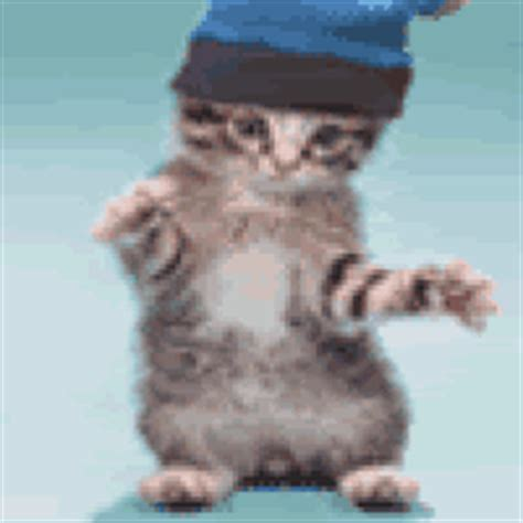 Kaos 3d Kucing Cat All Size dancer gif find on giphy