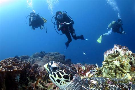 best dive shop 10 best scuba dive centers in bali where to learn scuba