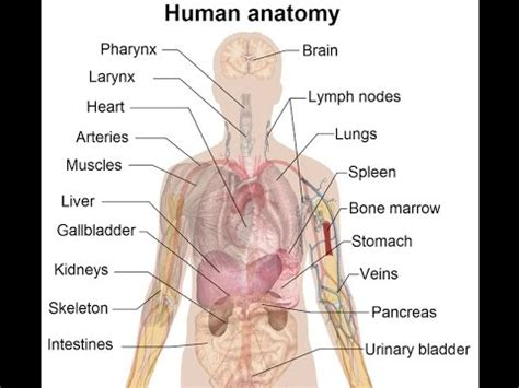 study guide for the human in health and illness 6e books human anatomy and physiology study guide course learn