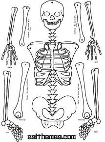 How To Make A Human Skeleton Out Of Paper - make a paper skeleton to label bones school