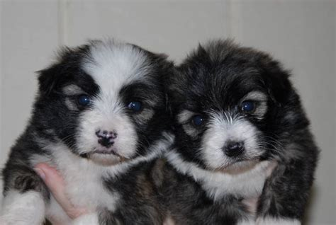 puppies for sale in mississippi small mixed breed dogs