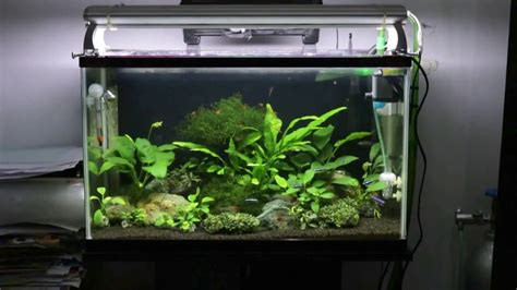 Aquascape Maintenance by Planted Tank Aquarium Aquascape With Low Maintenance