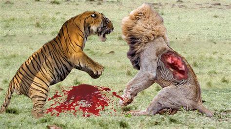 amazing wild animal attacks  craziest animal