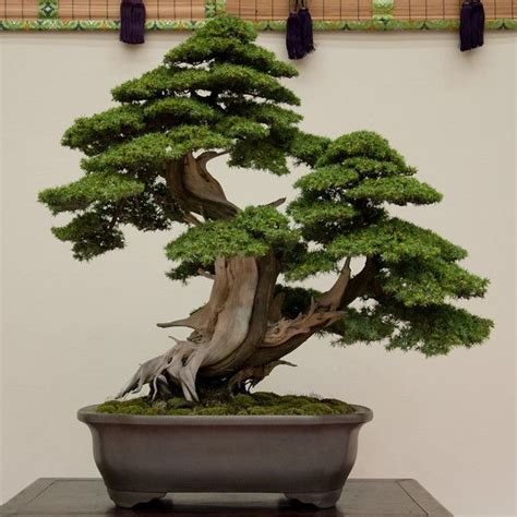 bonsai interieur jardiland les bonzai